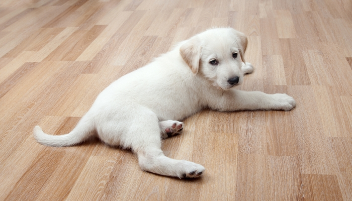 5 Home Improvement Projects for Dog Owners