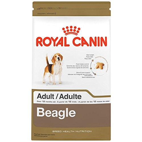 A Beagles Diet Best Dog Food f...