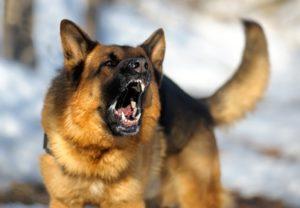 2. German Shepherd