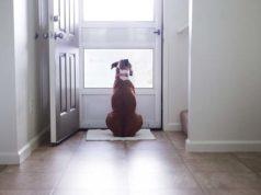 Best Dog Doorbells and Housetraining Bells for Dogs