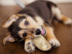 Best Dog Treats Hooves