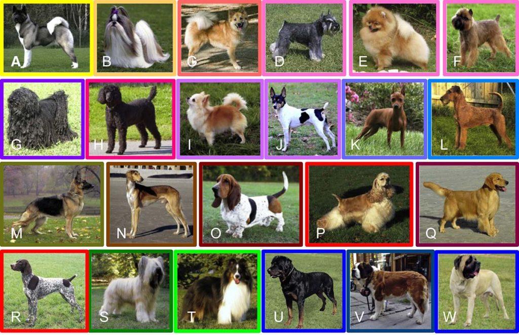 Dog breed evolution - Clades