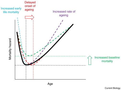 Dog's age and lifespan