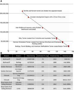 Evolution of the dog chart