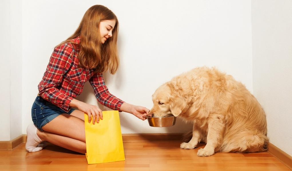 Homemade Dog Food For Golden Retriever Puppy