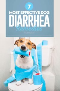 The Best Dog Diarrhea Remedies
