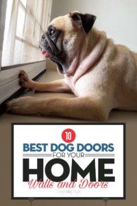 The Best Dog Doors for Walls and Doors