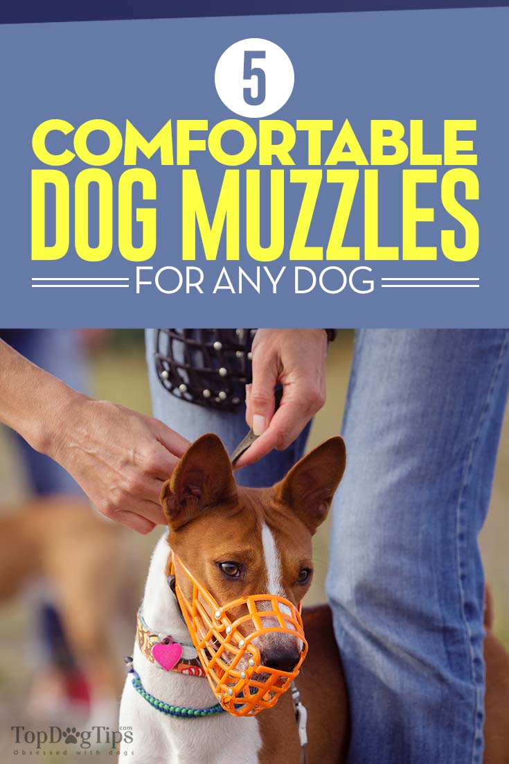 The Best Dog Muzzles for Any Dog