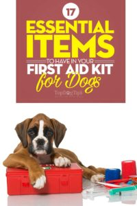 Top Essential Items to Have in Your First Aid Kit for Dogs
