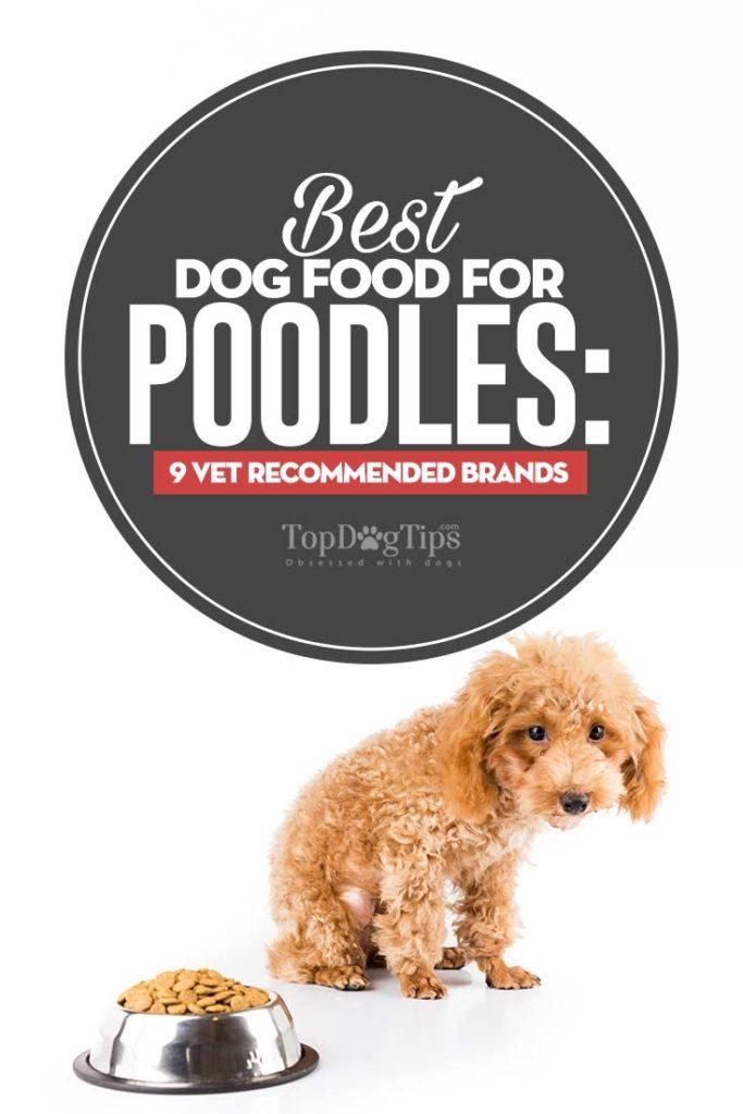 Vet Recommended Best Dog Foods for Poodles