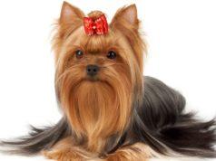 best dog hair bow