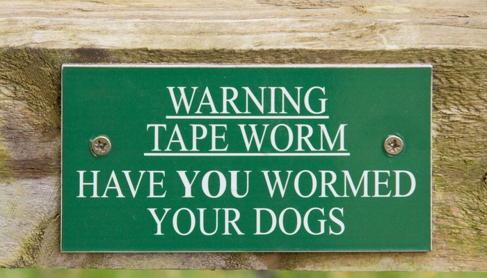 Can Humans Get Worms from Dogs?
