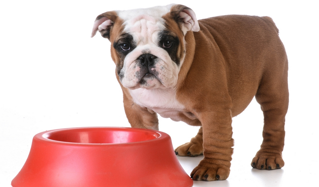 bulldog food best dog food for english bulldogs 6 vet recommended brands 6848
