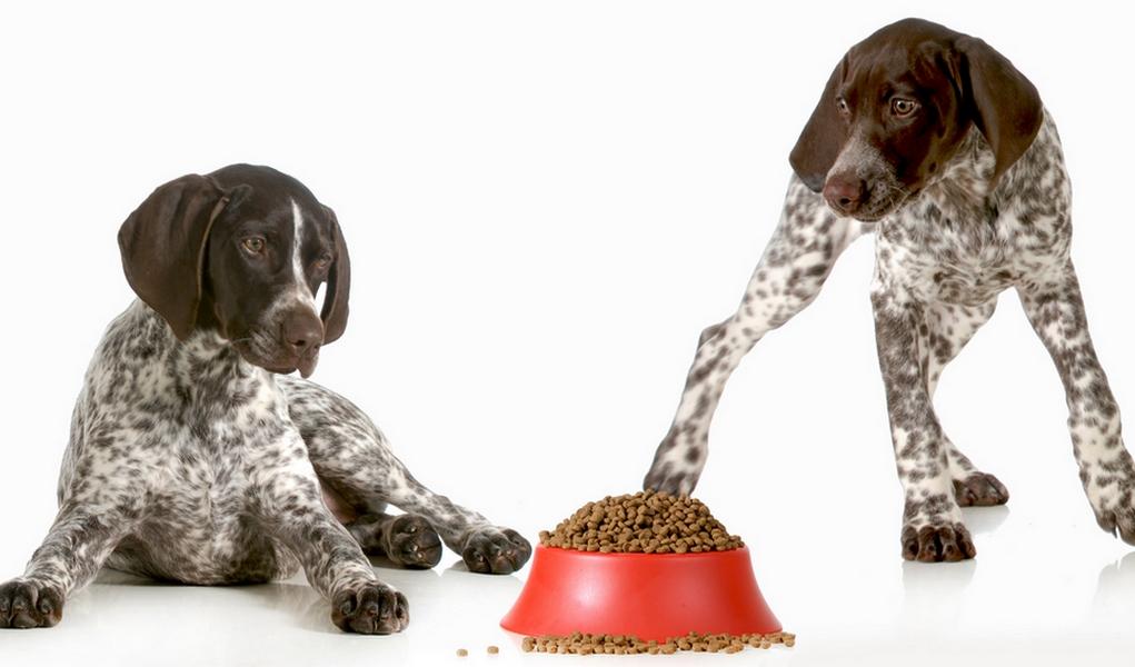 Best Dog Food For German Shorthair