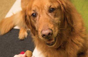 Best Dog Pill Pocket Treats 2020