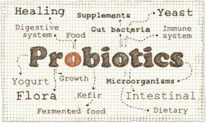 Top Best Dog Probiotic Supplements