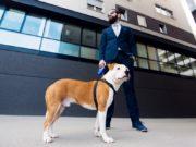 Biggest Dog Companies