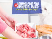 Guide on Homemade Dog Food vs Commercial Brands
