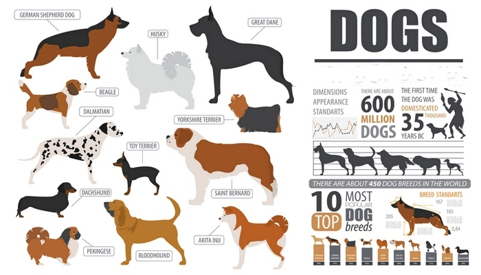 How the Study of Dog DNA Is Improving Our Understanding of Humans