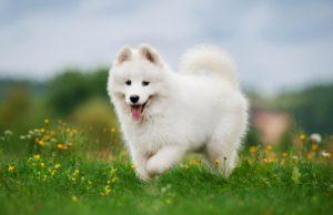Most Beautiful Dog Breeds