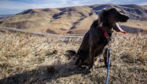 Dogs in Denver, Colorado