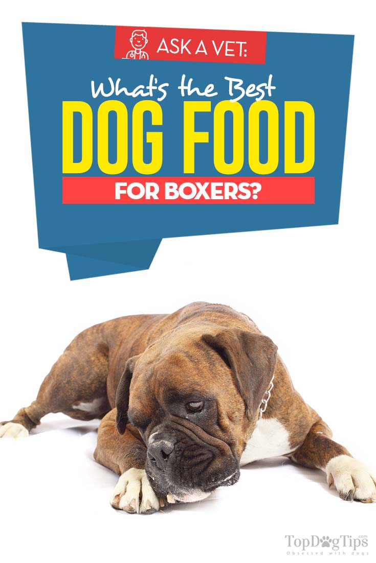 The Best Dog Food for Boxers