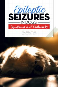 Tips on Epileptic Seizures in Dogs
