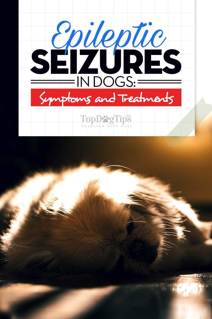 seizures in older dogs - 735×1102