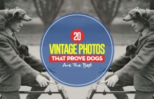 Top 20 Vintage Photos That Prove Dogs Are The Best