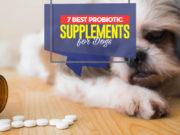 Top 7 Best Dog Probiotic Supplements