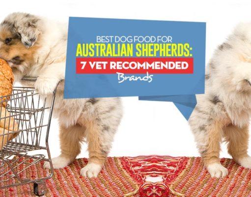 Top Best Dog Foods for Australian Shepherds