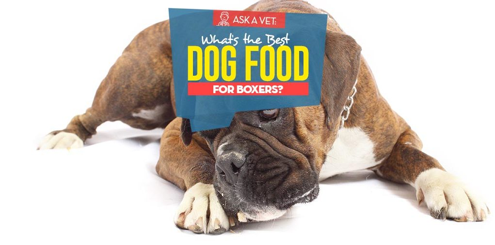 Top Best Dog Foods for Boxers