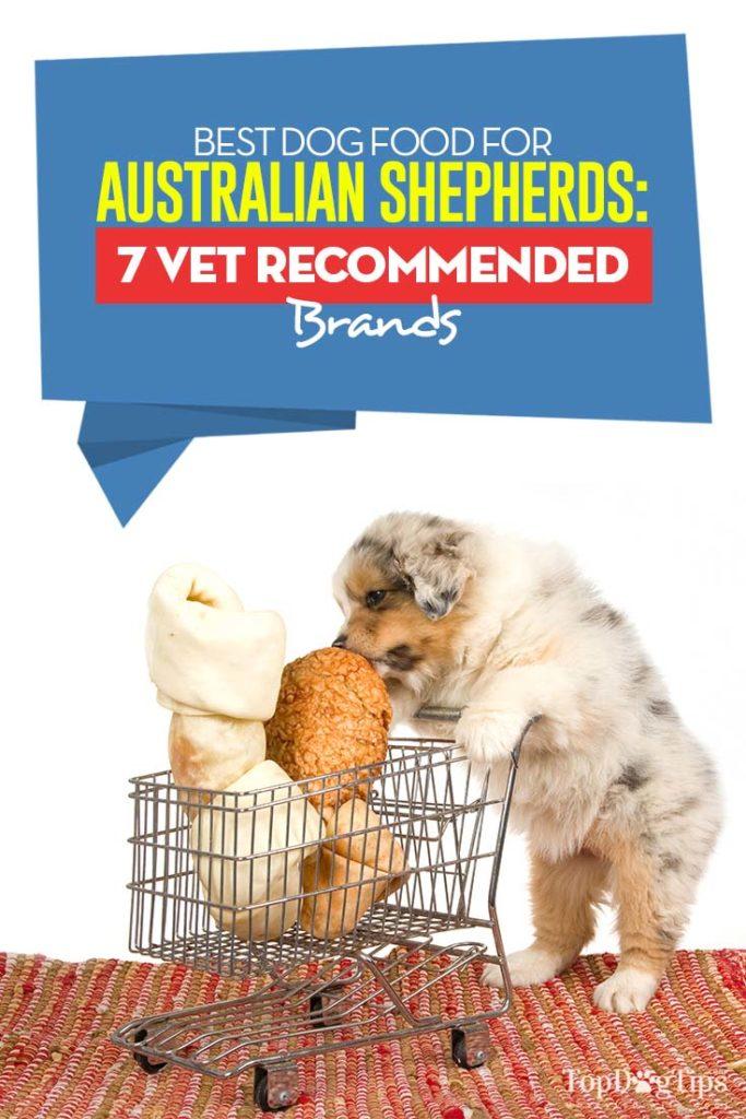 Vet Recommended Best Dog Foods for Australian Shepherds