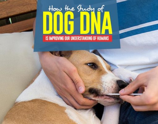 Why Study of Dog DNA is Improving Our Understanding of Humans