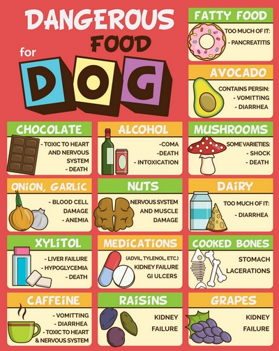 7 Human Foods Dogs Can't Eat and What
