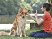 commands you must teach your dog