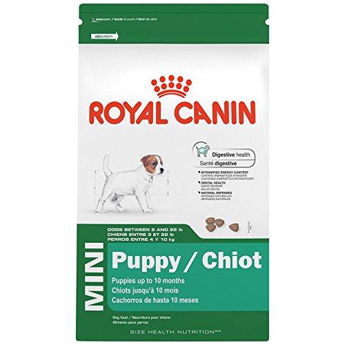 Best Dog Food For Cavalier King Charles Spaniels 8 Vet