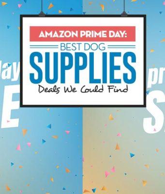 Amazon Prime Day - Top Best Dog Supplies Deals