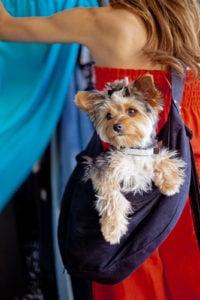 Best Dog Carrier Slings