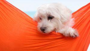 Best Dog Carrier Slings for Dogs
