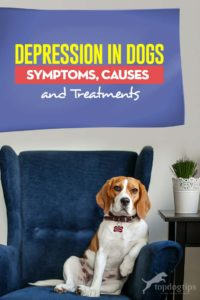 Depression in Dogs Guide - Symptoms, Causes and Treatments