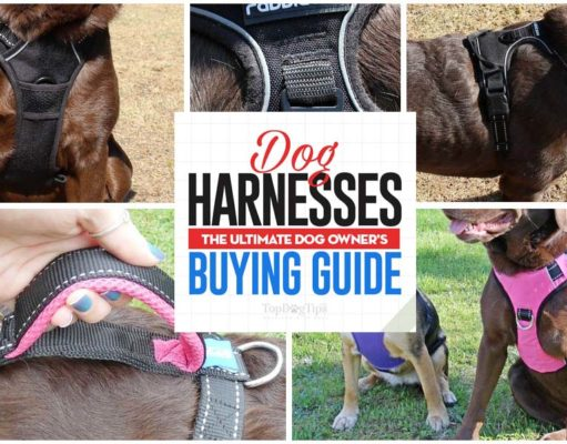 Dog Harnesses The Ultimate Buyer's Guide for Owners