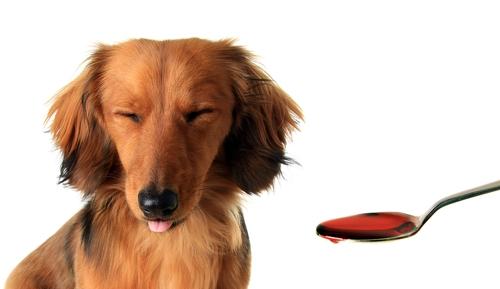 Dog Medication Take With Food But Dog Won T Eat