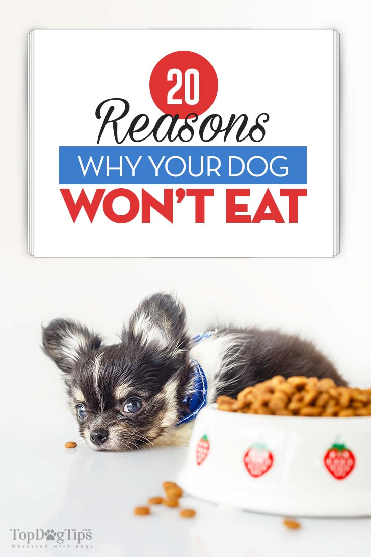 20 Reasons Why Your Dog Won 39 T Eat And What To Do About It