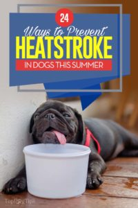 The 24 Ways to Prevent Heatstroke in Dogs This Summer