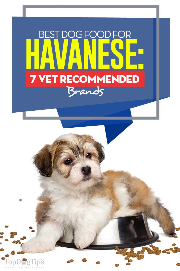 The Best Dog Food for Havanese