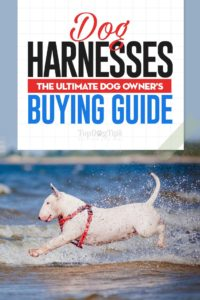 The Dog Harnesses Buying Guide