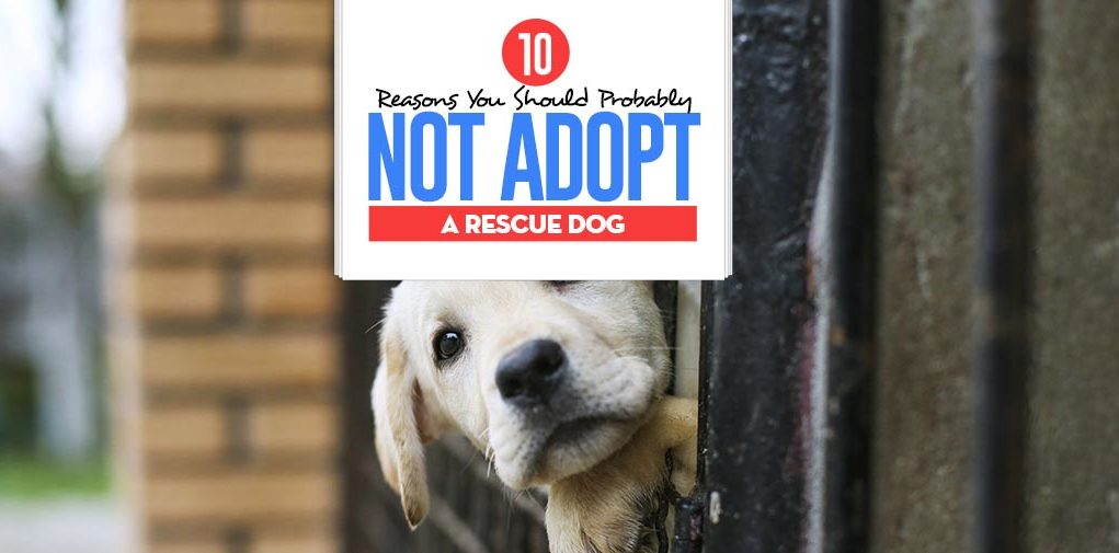 Top 10 Reasons Why Dog Adoption May Not Be for You