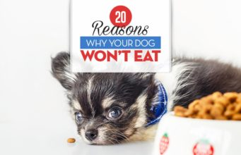 Top 20 Reasons Why Your Dog Won't Eat or Drink