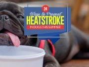 Top 24 Ways to Prevent Heatstroke in Dogs This Summer